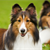 4 Tips to Keep Your Dog's Coat Healthy