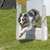 Team up With Your Dog for Flyball Fun