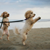 Big Fun for Little Dogs