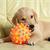 Picking Safe Puppy Toys