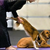 Doga: Yoga Your Dog Will Love