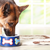 Keep Your Aging Dog Healthy: Serve This