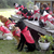 Dog Scouts of America: Is Your Dog a Leader?