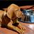 Dog Won't Eat? Manage His Feeding Issues