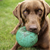 Treibball: Will Your Dog Dig It?
