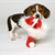 Holiday Hazards for Your Pet's Teeth