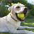 The Best Games to Play With Your High-Energy Dog