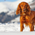 Winter Weather Hazards for Dogs