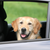 The Best Way for Your Dog to Ride in the Car with You