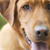 What to do with a dog that won�t stop barking