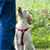 Find the Best Dog Trainer for Your Pup