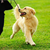 Easy Tricks to Train Your Dog in 10 Minutes a Day