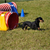 A Beginner's Guide to Dog Agility