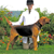 Meet the Penn-MaryDel Foxhound