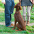 Get Results With Puppy Clicker Training