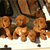 What to Ask a Dog Breeder