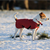 Does Your Dog Need a Jacket?