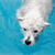 Could Your Dog Use Pool Therapy?