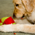 Dog-friendly Spring-cleaning: A How-to Guide