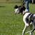 Is a Great Dane the Dog Breed for You?