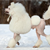 The Poodle: More Than Just a Pretty Dog