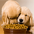 How to Avoid Chaos at Multiple-dog Feedings