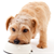 Is Your Dog Getting the Right Nutrients?