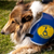 Assistance Dogs: Partners in Independence