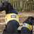 Hearing-Assistance Dogs: Loving Companions and Guides