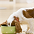 New Supplement Can Help Your Dog's Digestion