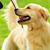 Teach Your Dog Self-control