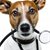 How to Manage Your Dogs Health Care