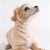 New Year�s Resolutions for Your Dog