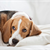 The Main Causes of Doggy Depression, and What to Do About It