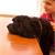 Dog Feeding Mishaps Corrected