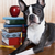 Measure Your Dog's Smarts