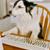 Is Virtual Fun in Your Dog's Future?