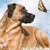 Can Dogs Have Spiritual Experiences?