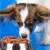 Does Your Dog Food Meet AAFCO Standards?