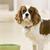 Understanding Your Dog's Mealtime Behavior