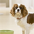 Understanding Your Dog's Mealtime Behavior