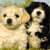 9 Key Ingredients That Nourish Growing Puppies