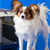 Dogs and Airplane Travel: A Deadly Mix?