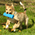 Train Your Dog to Go Fetch