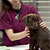 Top 10 $1,000 Dog Health Insurance Claims