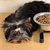 Can New Dog Feeders Help Solve Mealtime Problems?