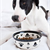 Dog Food Goes Natural and Holistic