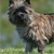 How to Stop Your Cairn Terrier From Chasing