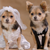 Make Your Dog a Part of Your Wedding