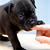 What Your Dog's Biting Means